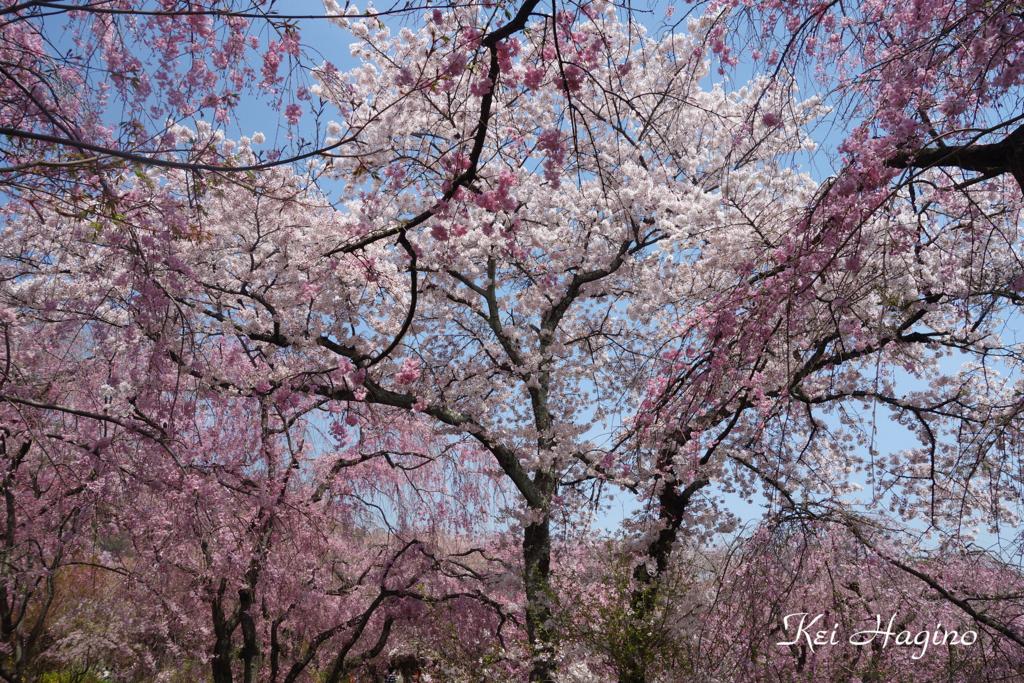 f:id:kyotomichi:20160410235145j:plain