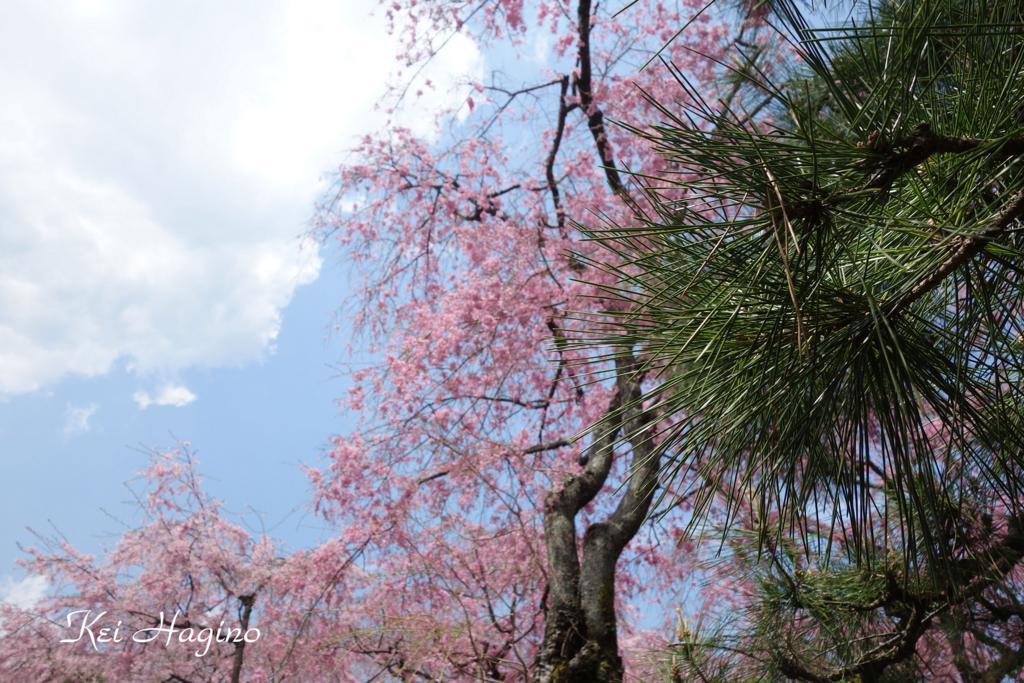 f:id:kyotomichi:20160411000705j:plain