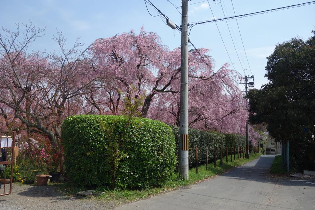 f:id:kyotomichi:20160411000933j:plain