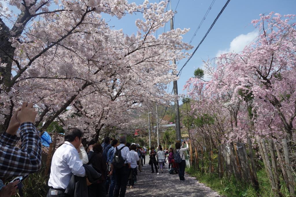 f:id:kyotomichi:20160411001126j:plain