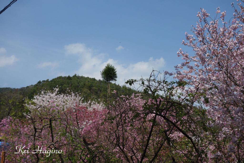 f:id:kyotomichi:20160411001157j:plain