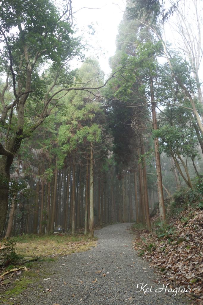 f:id:kyotomichi:20170103142033j:plain