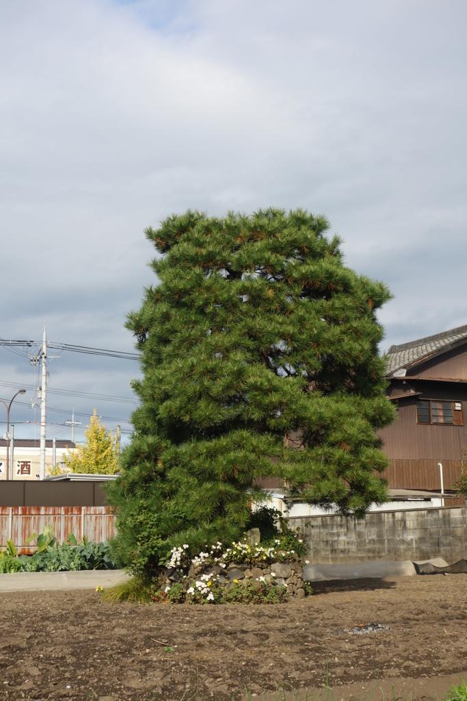 f:id:kyotomichi:20170103164513j:plain