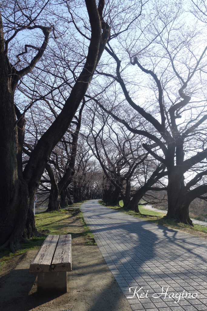 f:id:kyotomichi:20170408233347j:plain