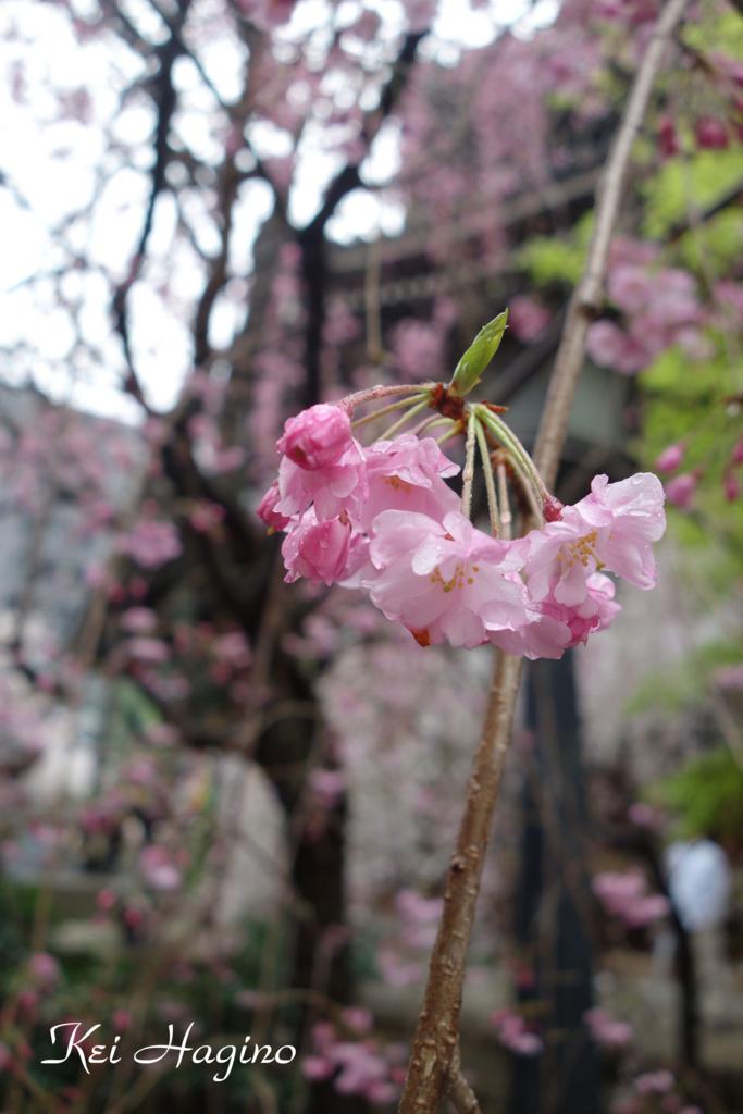 f:id:kyotomichi:20170409001921j:plain