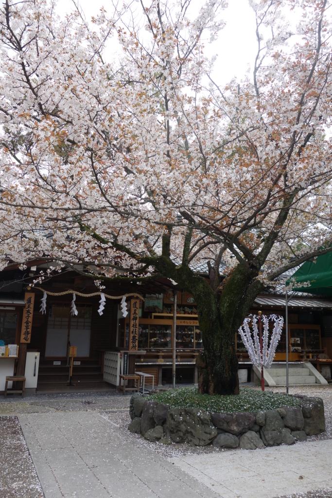 f:id:kyotomichi:20170409204541j:plain