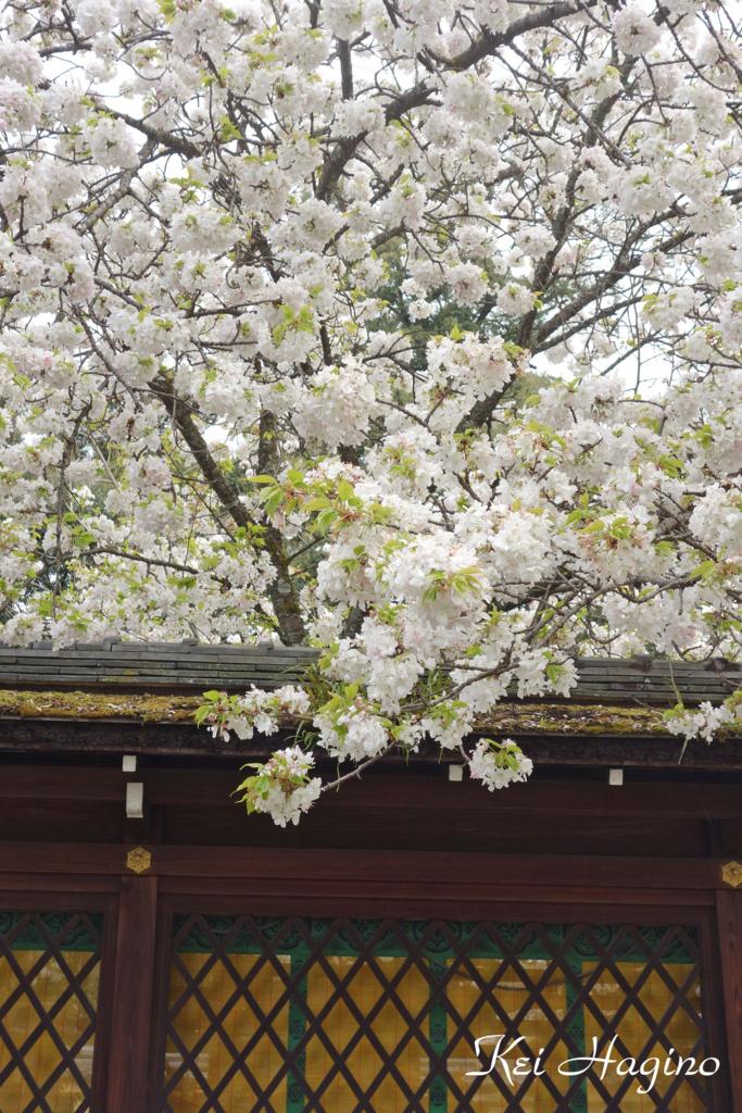 f:id:kyotomichi:20170504235432j:plain