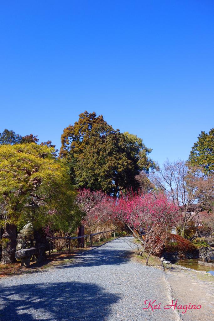 f:id:kyotomichi:20180310202517j:plain