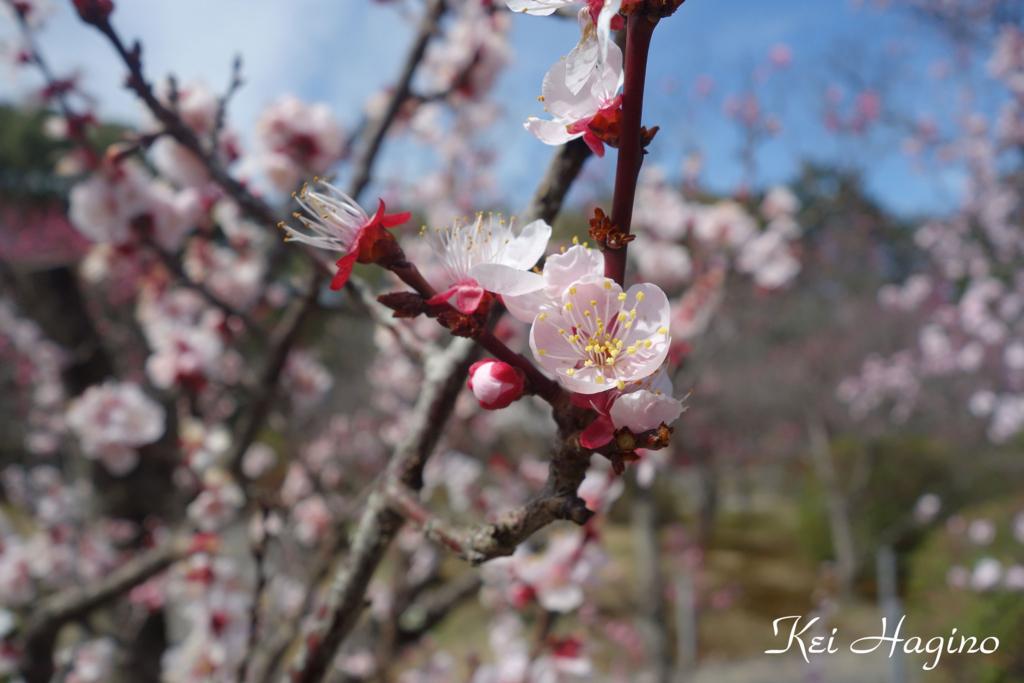 f:id:kyotomichi:20180318182028j:plain