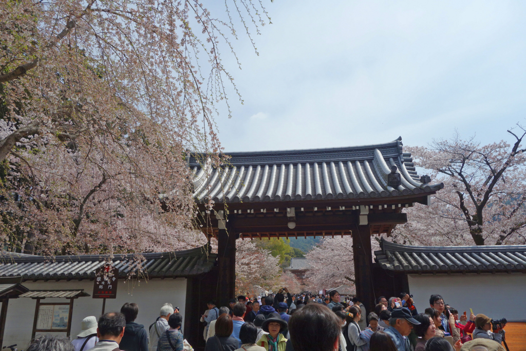 f:id:kyotomichi:20180401194534j:plain