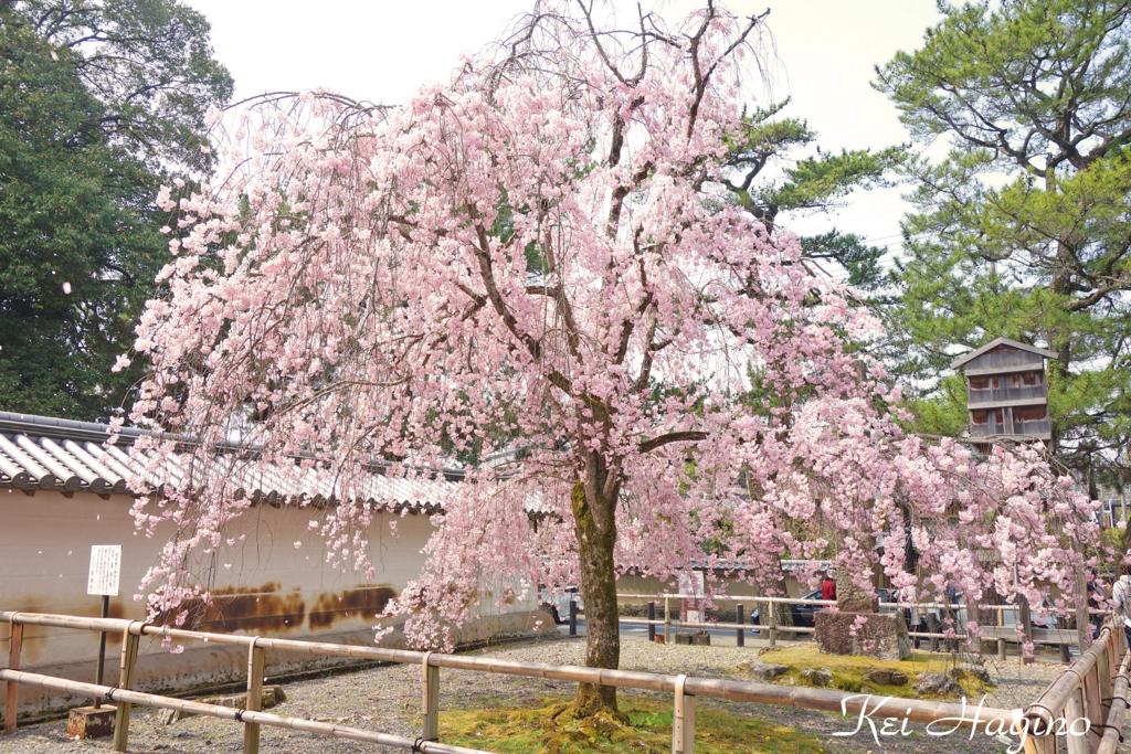 f:id:kyotomichi:20180401195403j:plain