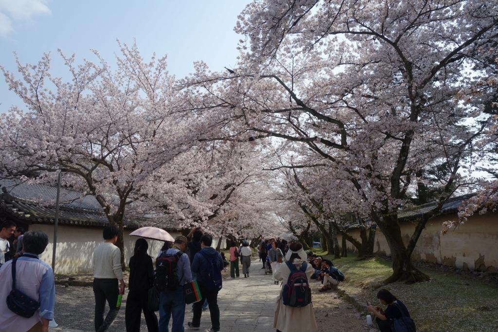 f:id:kyotomichi:20180401203913j:plain