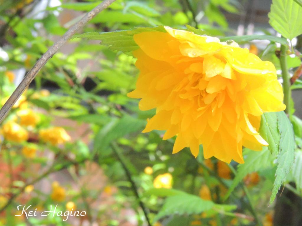 f:id:kyotomichi:20180429170142j:plain