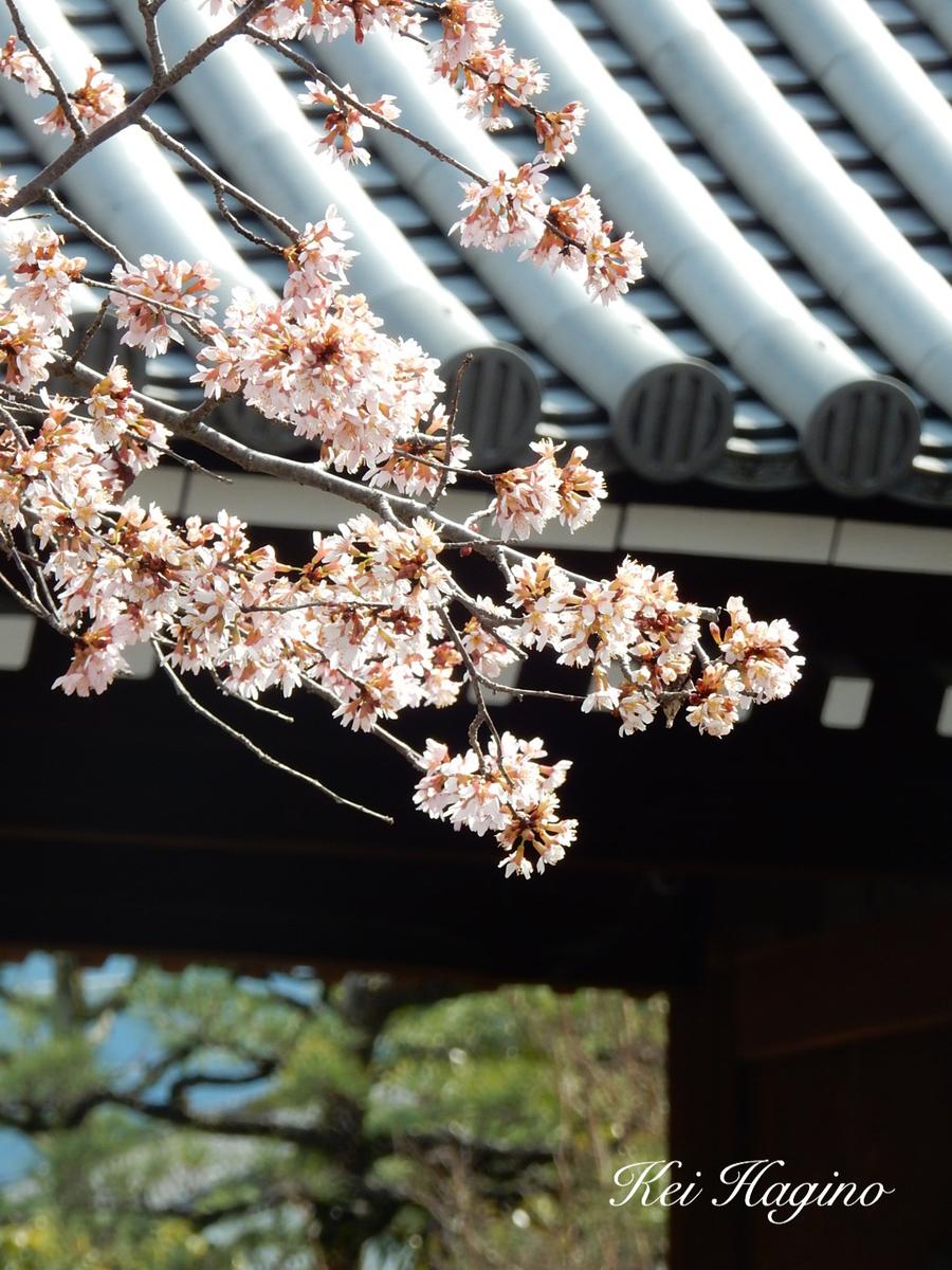 f:id:kyotomichi:20190601202416j:plain