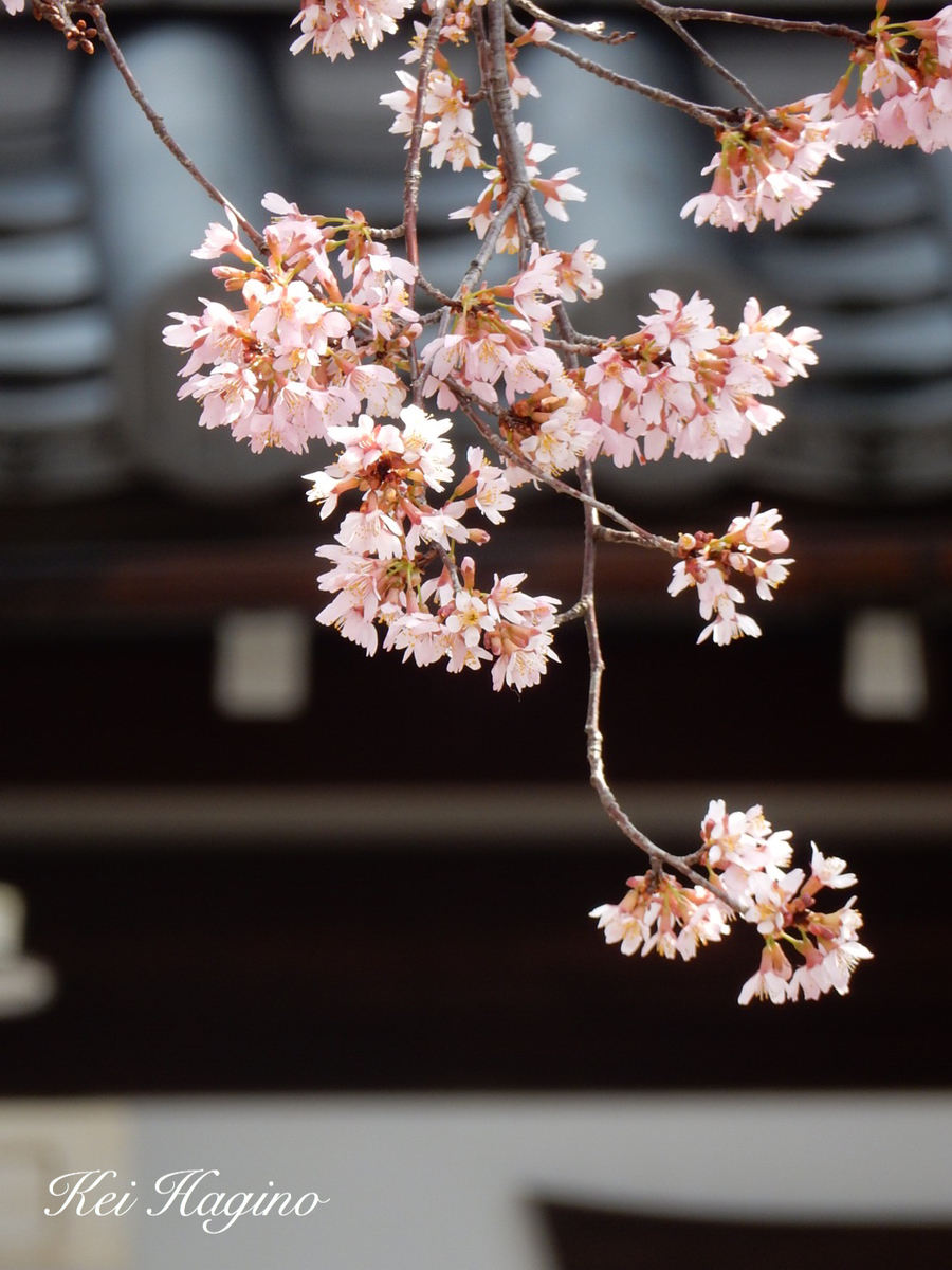 f:id:kyotomichi:20190601202924j:plain