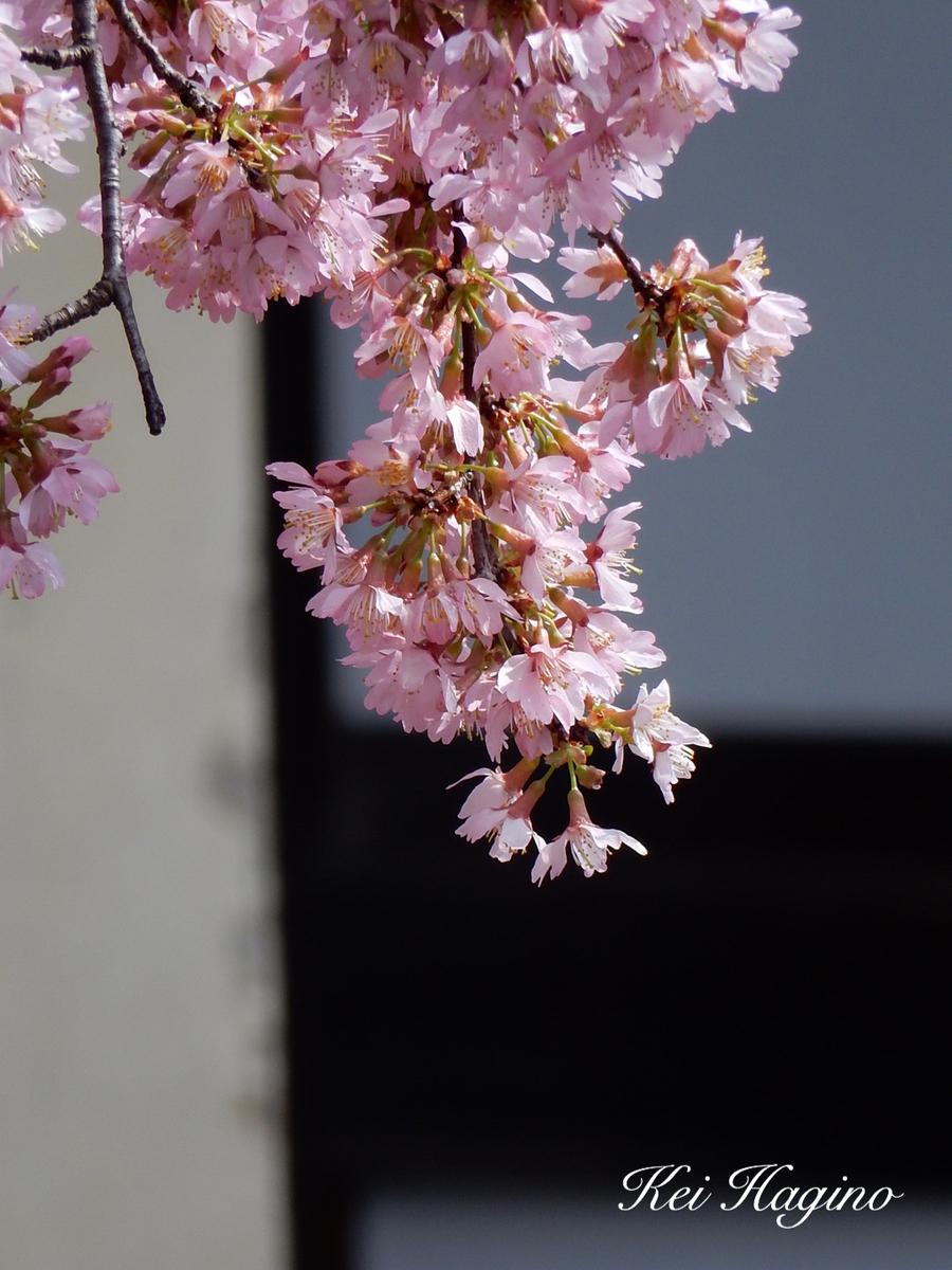 f:id:kyotomichi:20190601202954j:plain