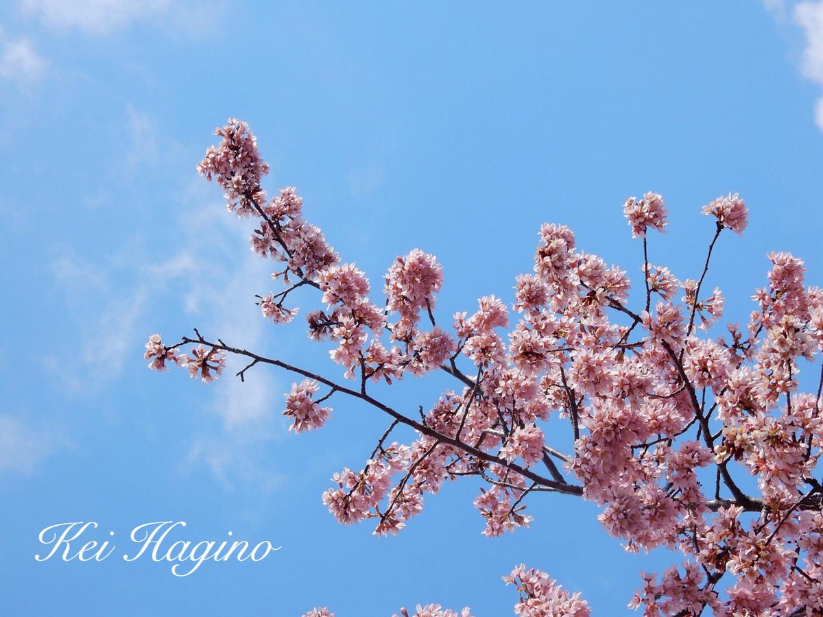 f:id:kyotomichi:20190601203017j:plain