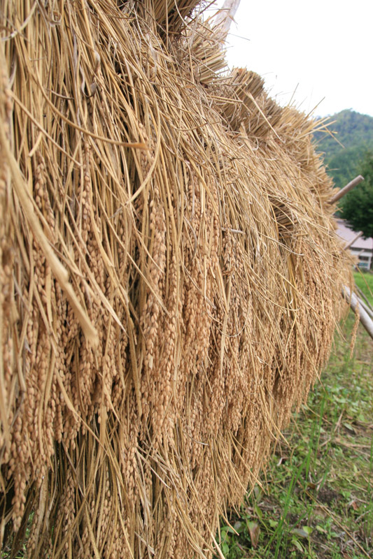 f:id:kyotomiyama:20120930101117j:image:w470