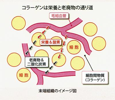 f:id:kyotomura4592:20160827083247j:plain