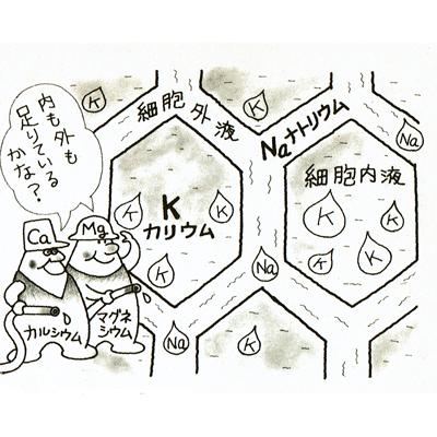 f:id:kyotomura4592:20180108143937j:plain