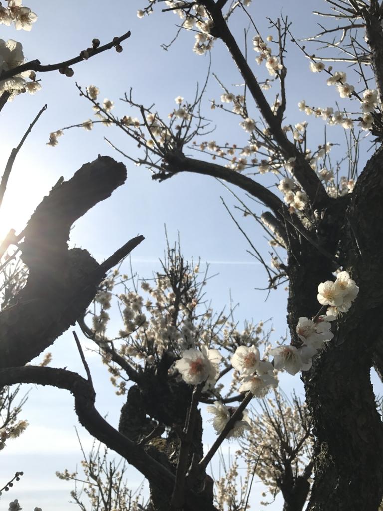 f:id:kyotosan:20170305104839j:plain