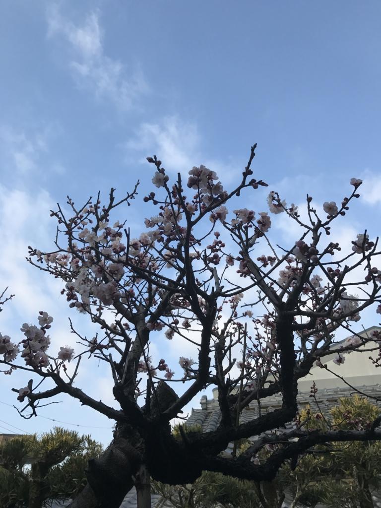 f:id:kyotosan:20170315234625j:plain