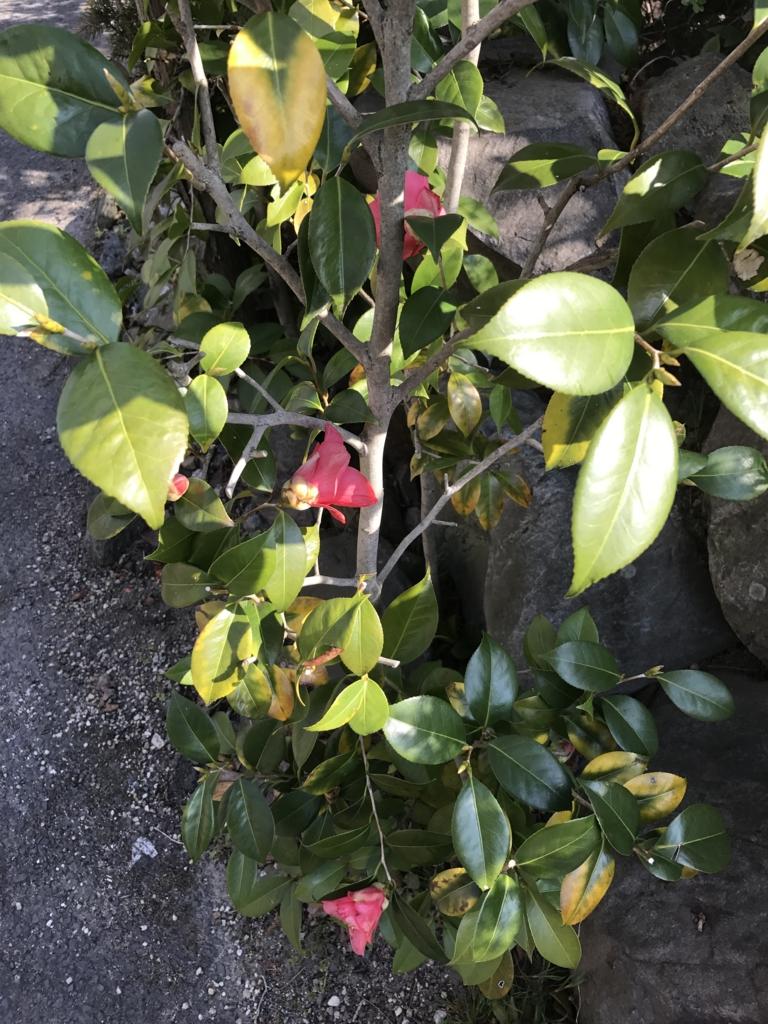 f:id:kyotosan:20170405085635j:plain