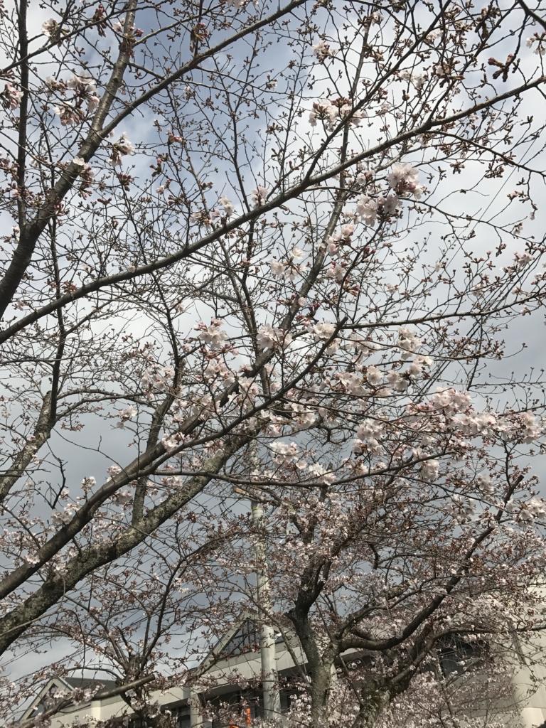 f:id:kyotosan:20170406085402j:plain
