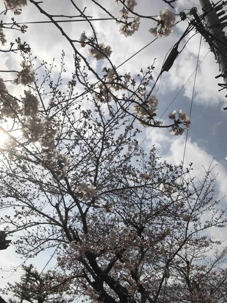 f:id:kyotosan:20170406085914j:plain