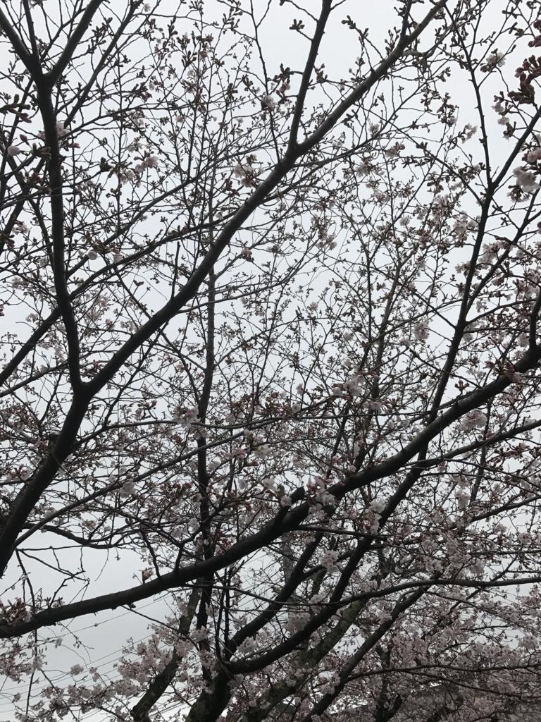 f:id:kyotosan:20170407085639j:plain