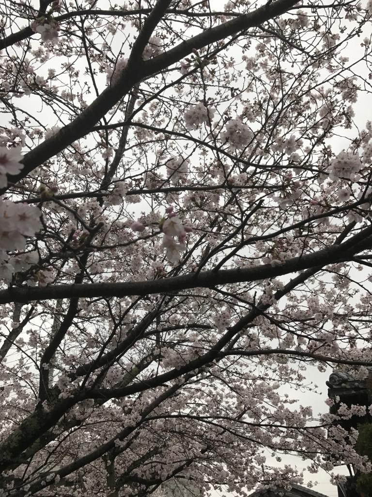 f:id:kyotosan:20170408163735j:plain