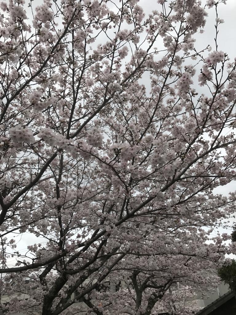 f:id:kyotosan:20170409141139j:plain