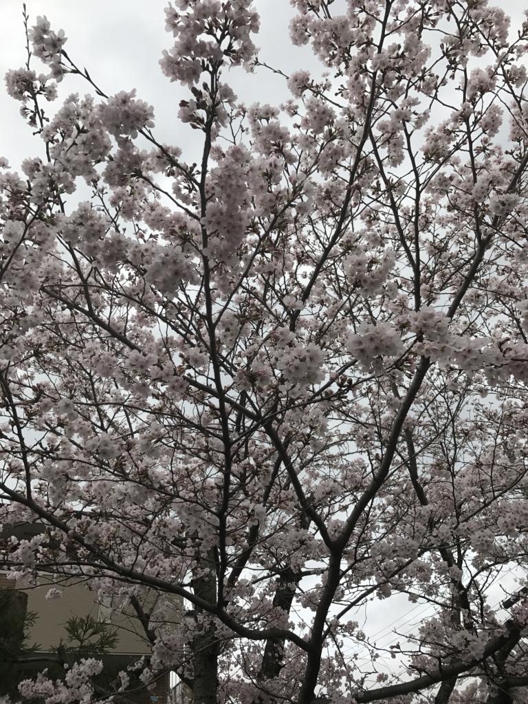 f:id:kyotosan:20170409141246j:plain