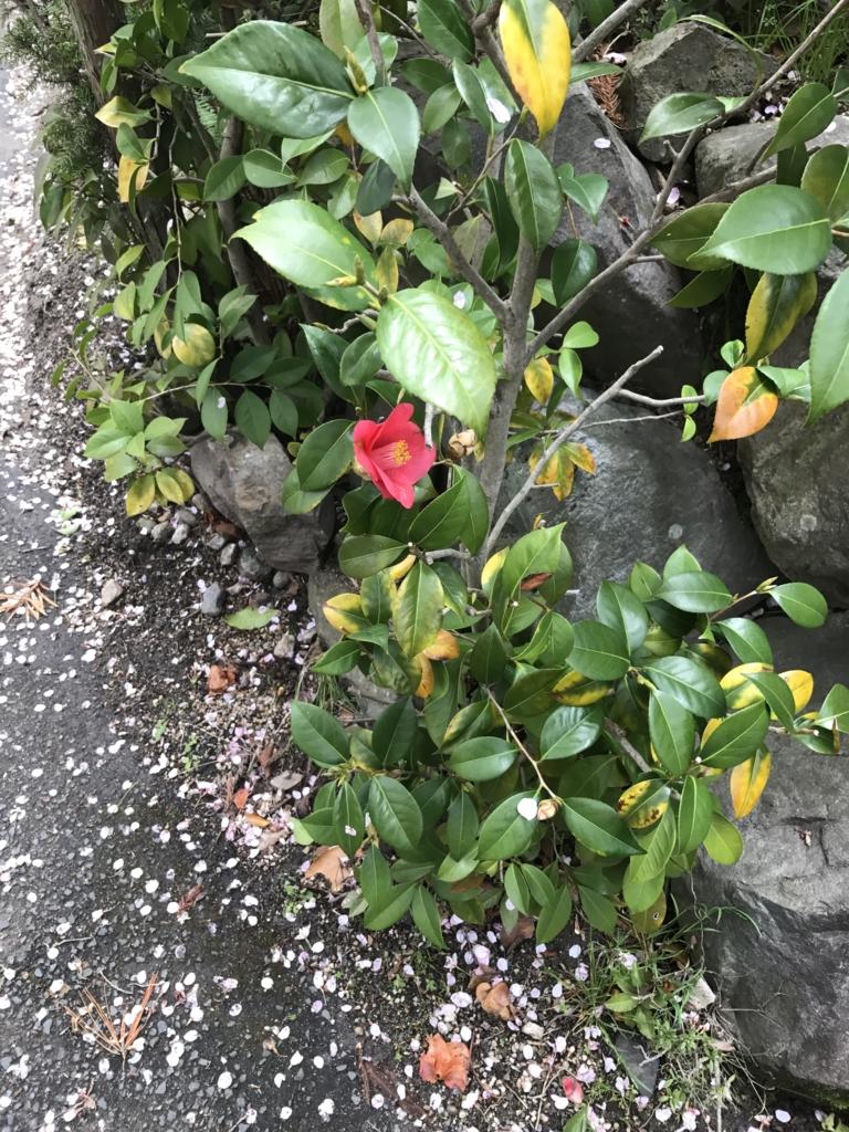 f:id:kyotosan:20170412085322j:plain