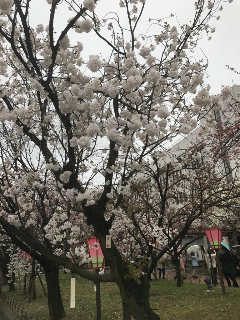 f:id:kyotosan:20170412213309j:plain