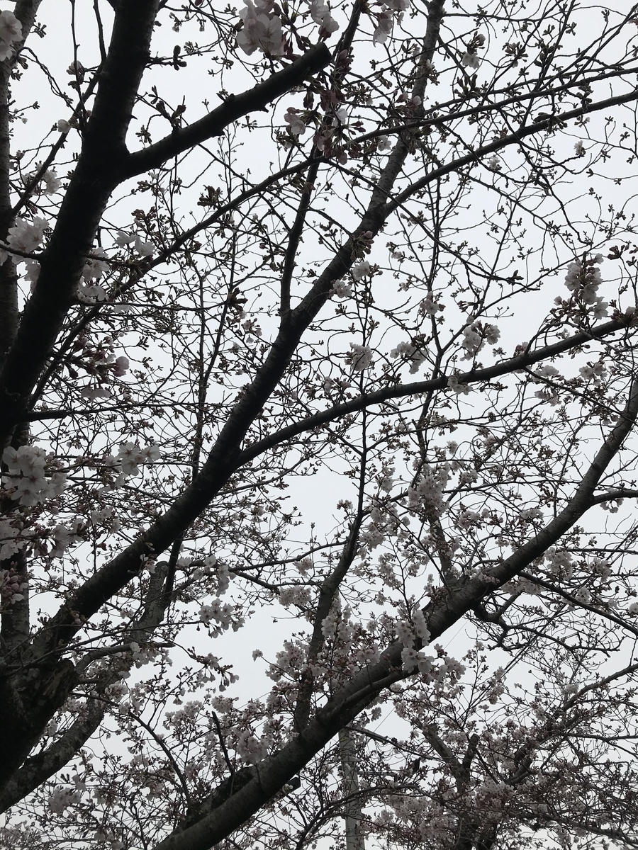 f:id:kyotosan:20200330213343j:plain