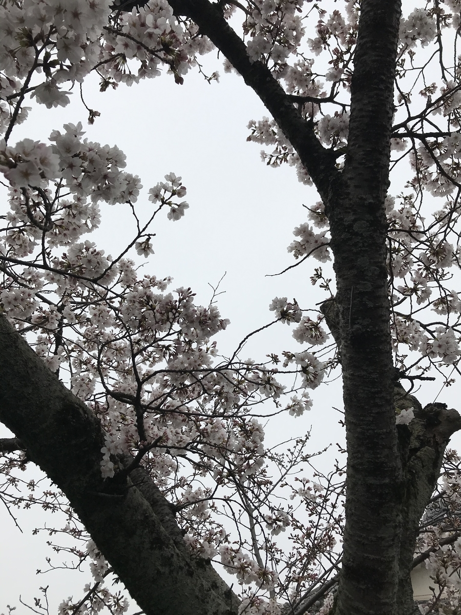 f:id:kyotosan:20200330213737j:plain