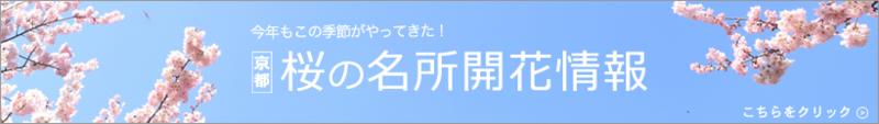 京都桜の名所開花情報
