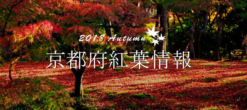 京都府紅葉情報2018