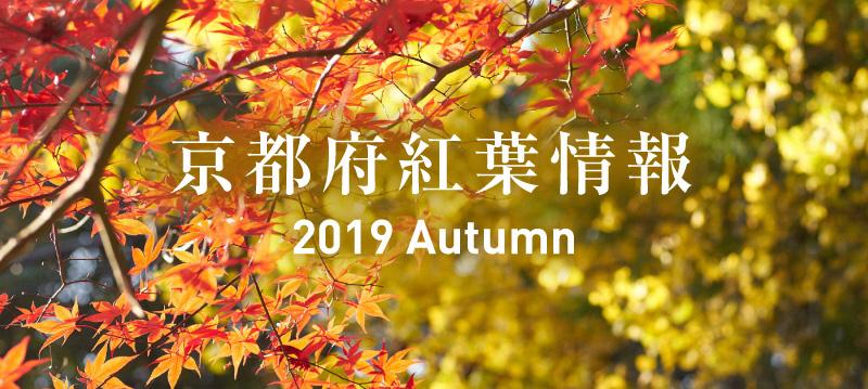 京都府紅葉情報2019