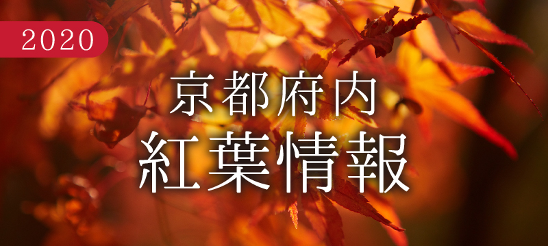 京都府紅葉情報2020