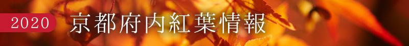 京都府 紅葉情報2020