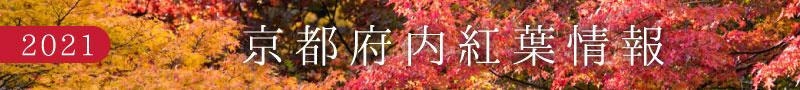 京都府紅葉情報2021