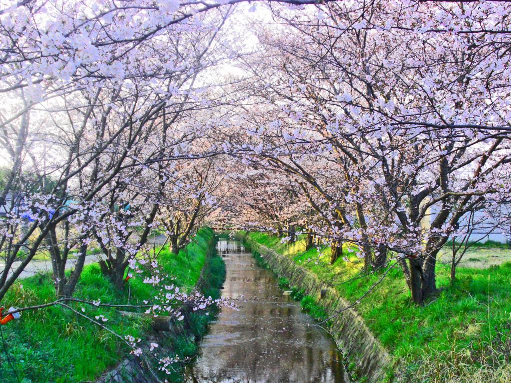 f:id:kyotoside_writer:20090405175903j:plain