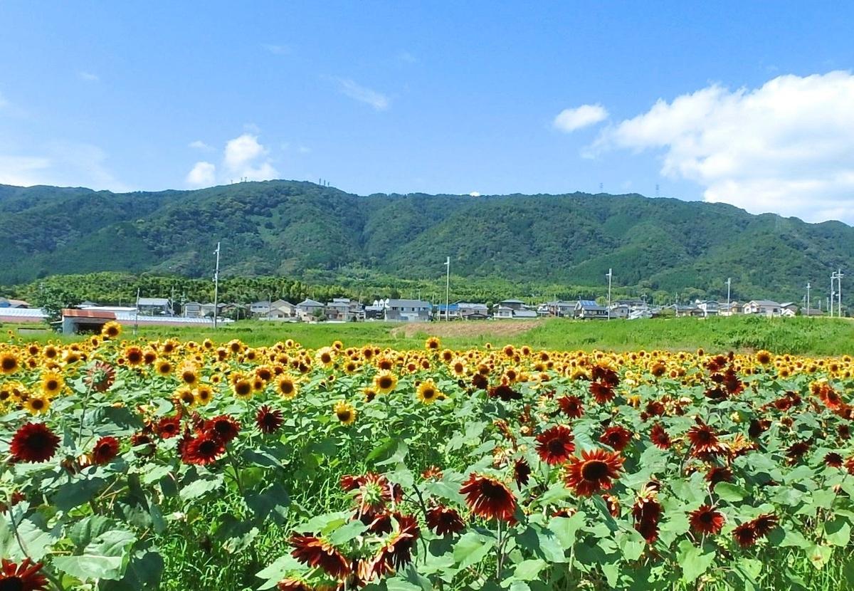 f:id:kyotoside_writer:20190729070210j:plain