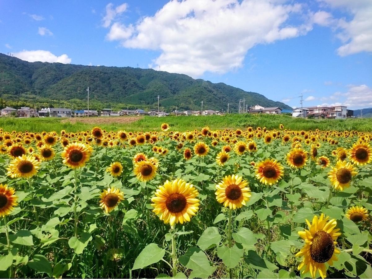 f:id:kyotoside_writer:20190729074918j:plain