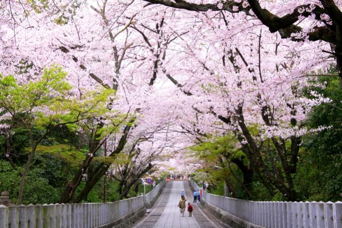 f:id:kyotoside_writer:20200305231701j:plain