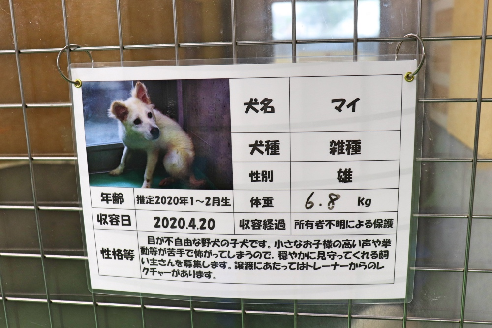 f:id:kyotoside_writer:20200914135700j:plain