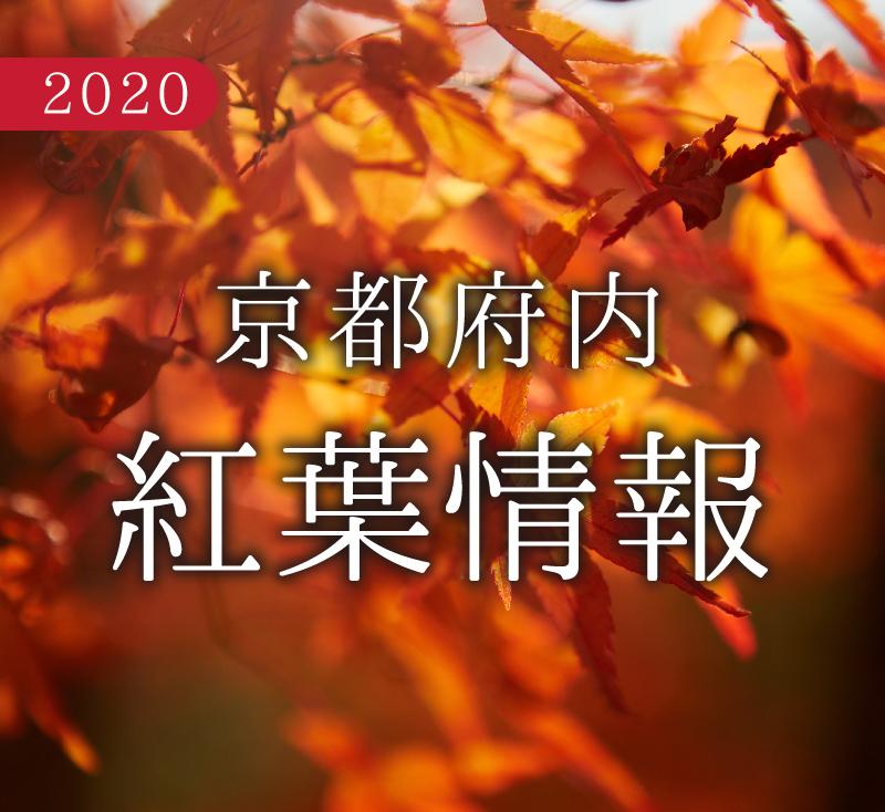 f:id:kyotoside_writer:20201027163025j:plain