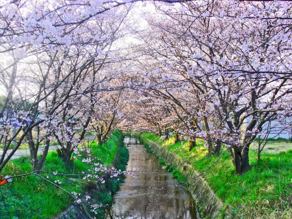 f:id:kyotoside_writer:20210311090515j:plain